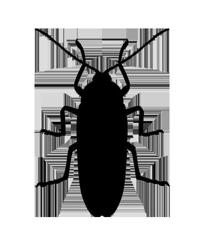 csótány
